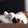 【愛猫日記】毎日アンヌさん#13