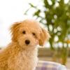【GREEN DOG(グリーンドッグ)】でおトクにお買い物!ポイントサイト経由!