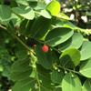 小石川植物園28