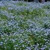 昭和記念公園で花写真