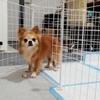 宇宙犬コスモの徒然日記 3日目《プピプピに固まる犬?》