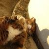 10月後半の #ねこ #cat #猫 その2