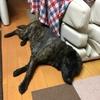 甲斐犬サン、初洗いの巻〜イツカ綺麗ニナッテヤル(๑•̀ㅂ•́)و✧