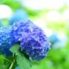 【九星別】6月の過ごし方アドバイス