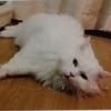 猫を探している飼い主と動物愛護団体Go!Cats