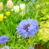 春のお花たち。