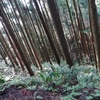 森林探検隊、狭き道を行く。