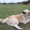 マヤ暦K190『家族のような仲間でフォローし合おう』~白い犬~