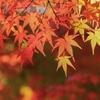 紅葉の季節の軽井沢結婚式の魅力