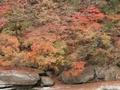 「トロッコわたらせ渓谷号」で見る紅葉の絶景と列車レストラン