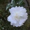 庭に咲いた一輪の花