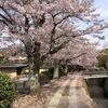 4月12日 京都を観光する