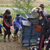 森のお遊び会 9月 収穫した麦の脱穀と風選