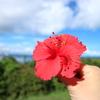 本土で伝わらないが、沖縄人がどうしても使いたい「ウチナーグチ」ベスト3