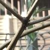 オリーブの木に蟻