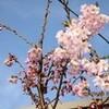 春の日、「佐久平浅間小学校」開校式。