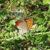 畑の昆虫3