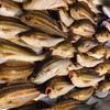 千葉県片貝沖でイサキのコマセ釣り