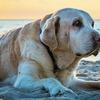 犬のお腹に腫瘍が・・・。これはガンじゃないよね?