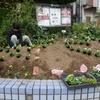 花壇の植え付け