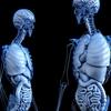 【毛細血管info⑥】ゴースト血管と様々な症状②(骨粗しょう症①)