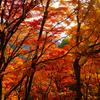 絶景かな 絶景かな  高尾山、三頭山の紅葉