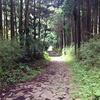 東海道を歩く その6-1 箱根から沼津のうち、箱根の山下り