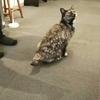 【看板がいる高円寺のギャラリー】ぬく猫・さむ猫展 ギャラリー来舎