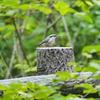 八千穂高原自然園で野鳥を楽しむ