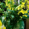 カウンターの花(5)