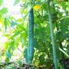 雑草農法で、野菜作り始めました。