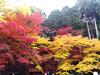 猪肉と紅葉の景色を楽しむ、篠山サイクリングの旅