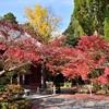 赤山禅院の秋、紅葉と寒桜2017。