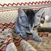 『谷保ねこ』で猫カフェが何たるかを知る