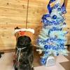 Merry Christmas to All❗️(o≧□≦)oメリー☆クリスマース!