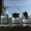 多肉植物の水耕栽培。根が伸びたのでグラスを変えた。