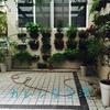 台湾は植物の魅せ方がうまいと思う