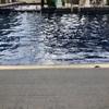 〈その856〉日曜日昼過ぎのプール