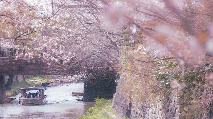 華やかな彩りと切ない記憶が出会う、アニメのワンシーンのような春 – 日本の四季を届けるフォトレター by Akine Coco