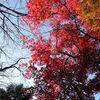天城の紅葉と太郎杉