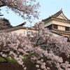 春のさくら祭り。臼杵城跡の桜撮影。