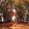 【公園】けやき広場