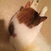三毛猫ミッケ 四毛になるの巻