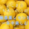 無農薬レモンを一年中楽しめるイチオシの活用術、毎日を豊かに