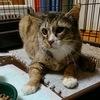 3-107   グレコ家猫日記〜正式に家猫になりました〜