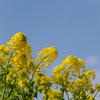 梅以外の花も