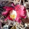 ツバキの花には何がある?
