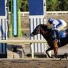 サンドジョーカー レース写真(観戦馬主様よりご提供!)