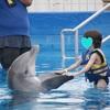 イルカと一緒に泳ぐ夢を叶えられた「シーライフパークハワイ」