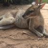 【ケアンズ市内に珍獣現る!?】オーストラリアで自然満喫の旅①